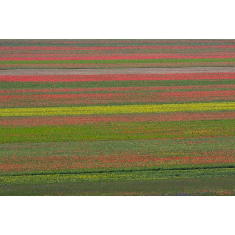 Album Fiorentino ritraente Le Grazie 3 Grazie